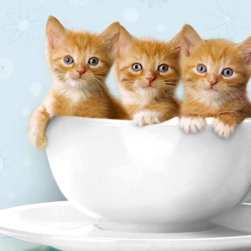 10 Most Popular Cute Kitten Pictures Free FULL HD 1920×1080 For PC Background 2018 free download %name
