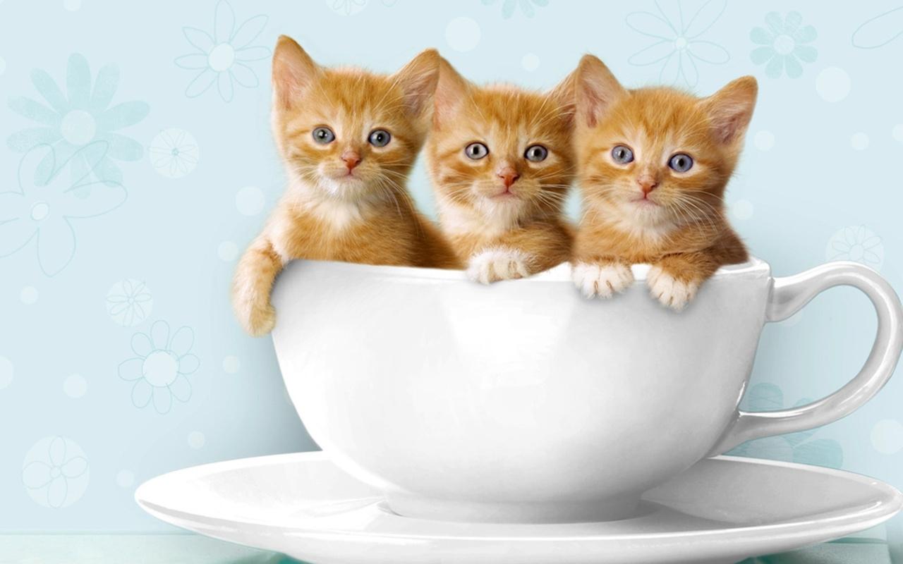 kitty world: cute kitten videos youtube