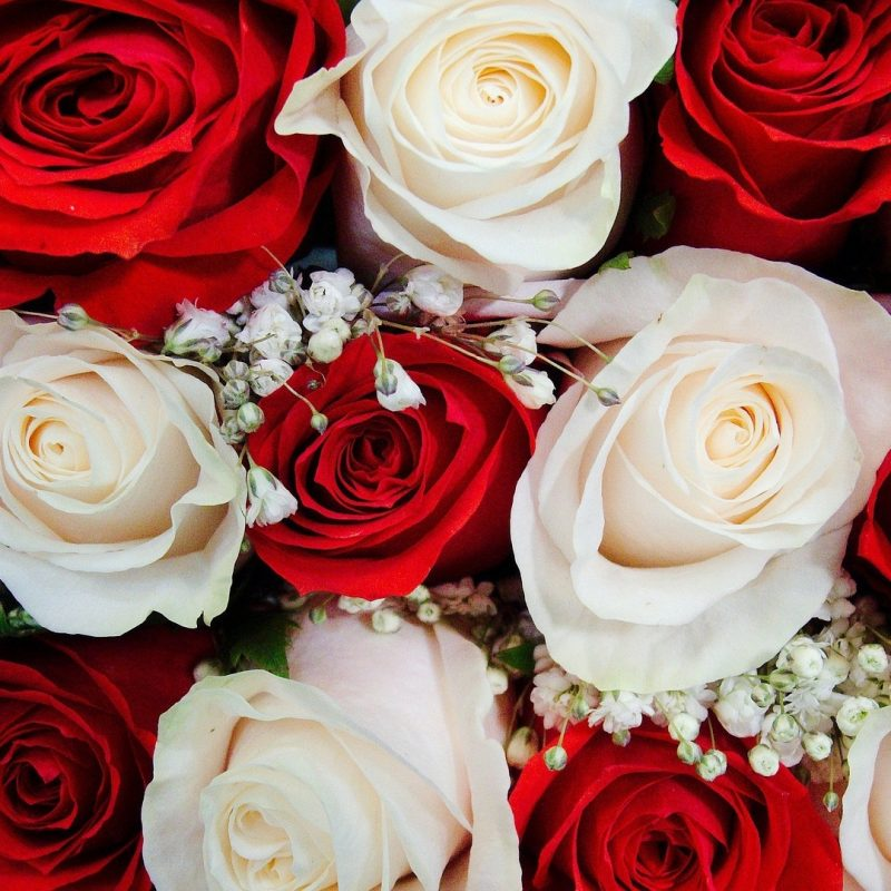 10 New White Roses Background Tumblr FULL HD 1920×1080 For PC Background 2018 free download knumathise red and white rose wallpaper images 800x800