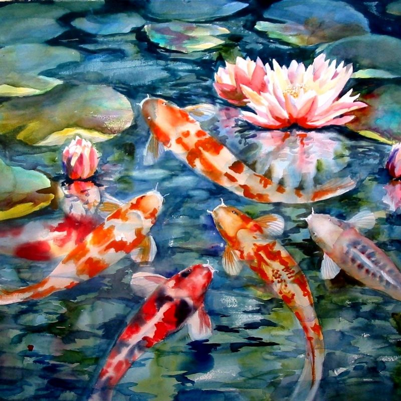 10 Most Popular Koi Fish Wallpaper Hd FULL HD 1080p For PC Background 2021 free download koi fish wallpaper high resolution hd desktop wallpaper instagram 800x800