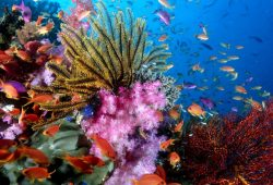 10 New Colorful Coral Reefs Wallpaper Hd FULL HD 1080p For PC Desktop