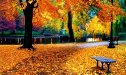 10 Top Fall Colors Wallpaper Background FULL HD 1920×1080 For PC Desktop