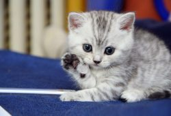 10 Top Kitten Wallpapers Free Download FULL HD 1920×1080 For PC Background
