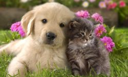 10 New Cat And Dogs Pictures FULL HD 1080p For PC Background
