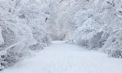 10 Latest Winter Wonderland Background Pictures FULL HD 1080p For PC Background