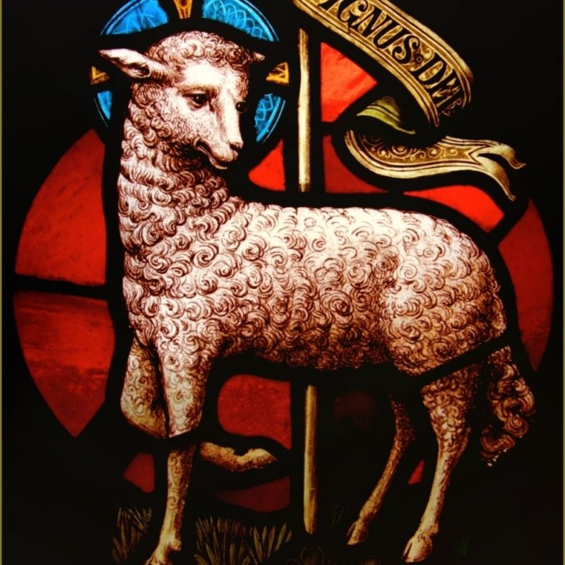 10 Latest Lamb Of God Images FULL HD 1920×1080 For PC Background 2018 free download lamb of god lamb of god pinterest agneau de dieu agneau et le 800x800