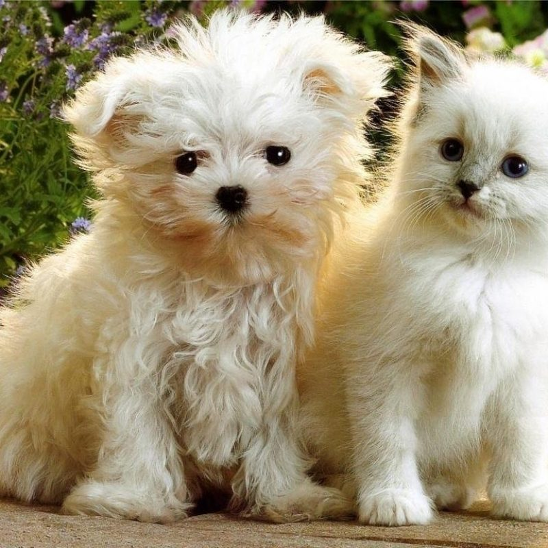 10 New Cute Kitten And Puppy Pictures FULL HD 1080p For PC Desktop 2018 free download latest funny pictures kittens and puppies 800x800