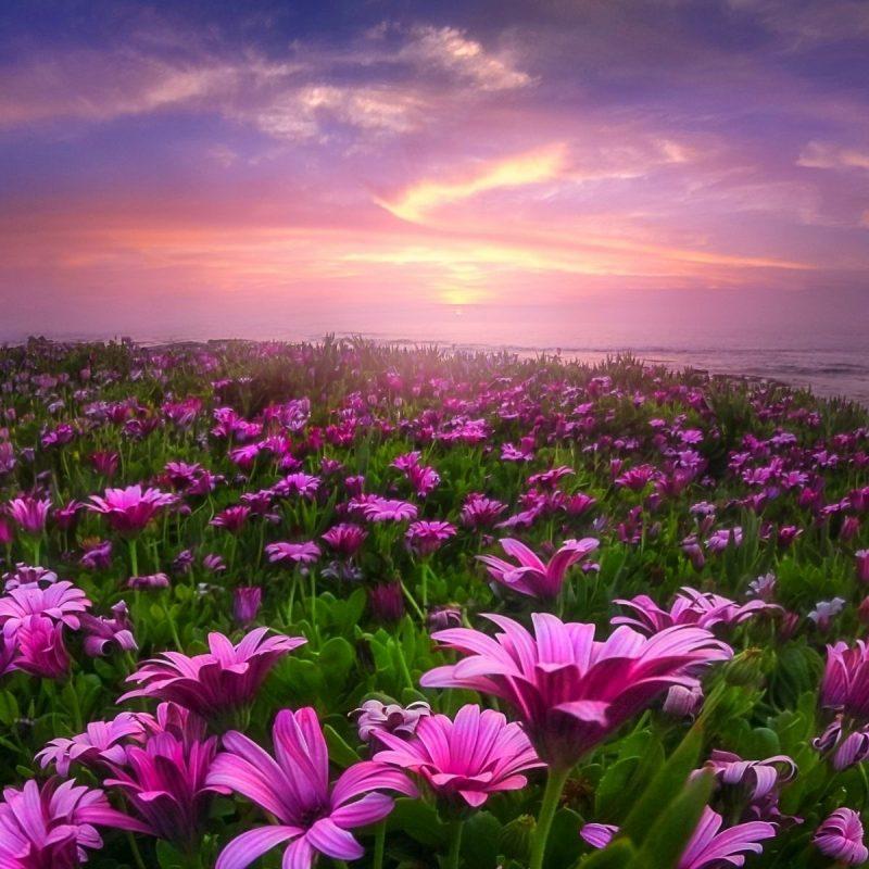 10 New Field Of Flowers Background FULL HD 1920×1080 For PC Desktop 2021 free download lavender field of flowers wallpaper hd hd desktop background 800x800