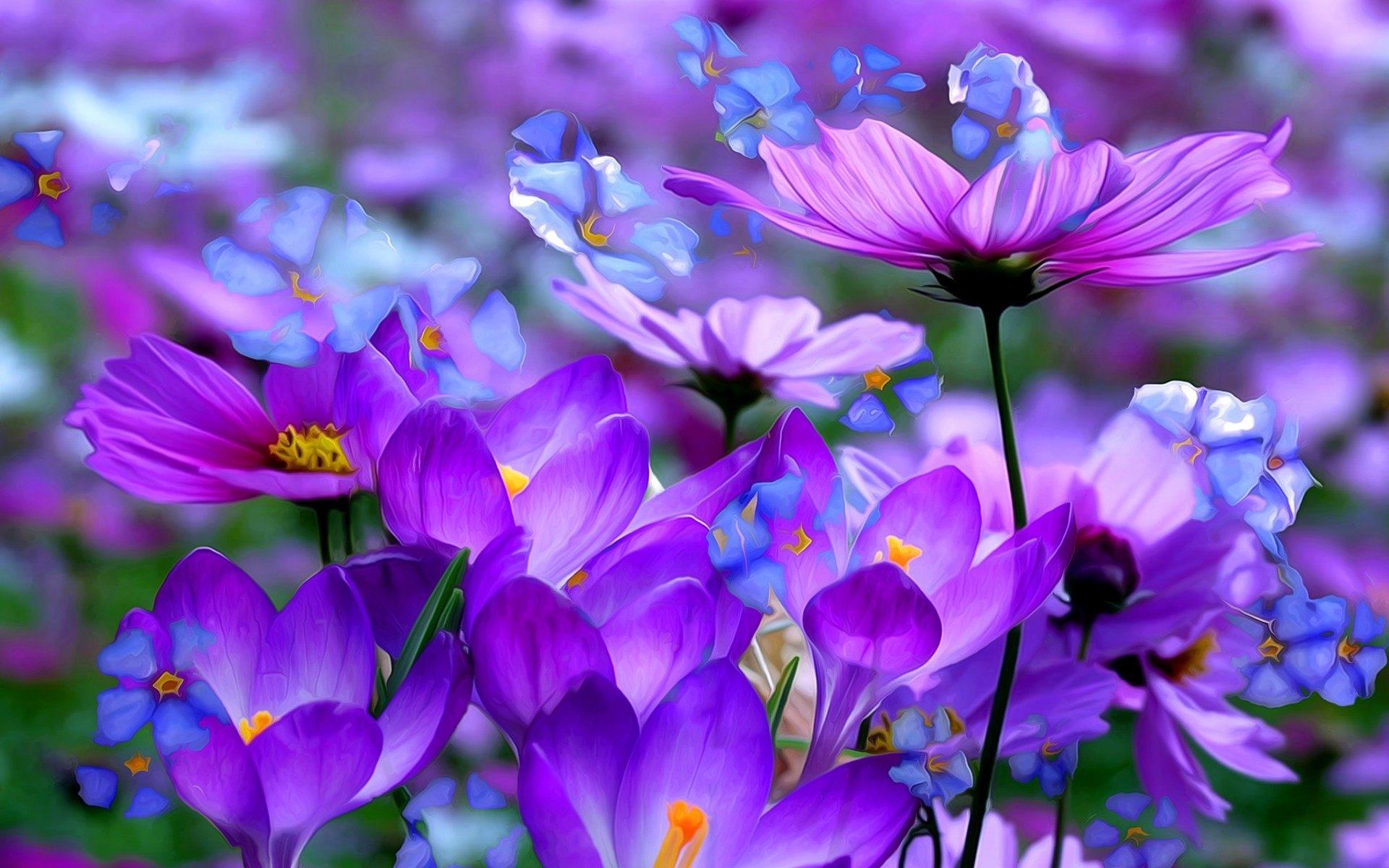 lavender purple flowers wallpaper | hd desktop background