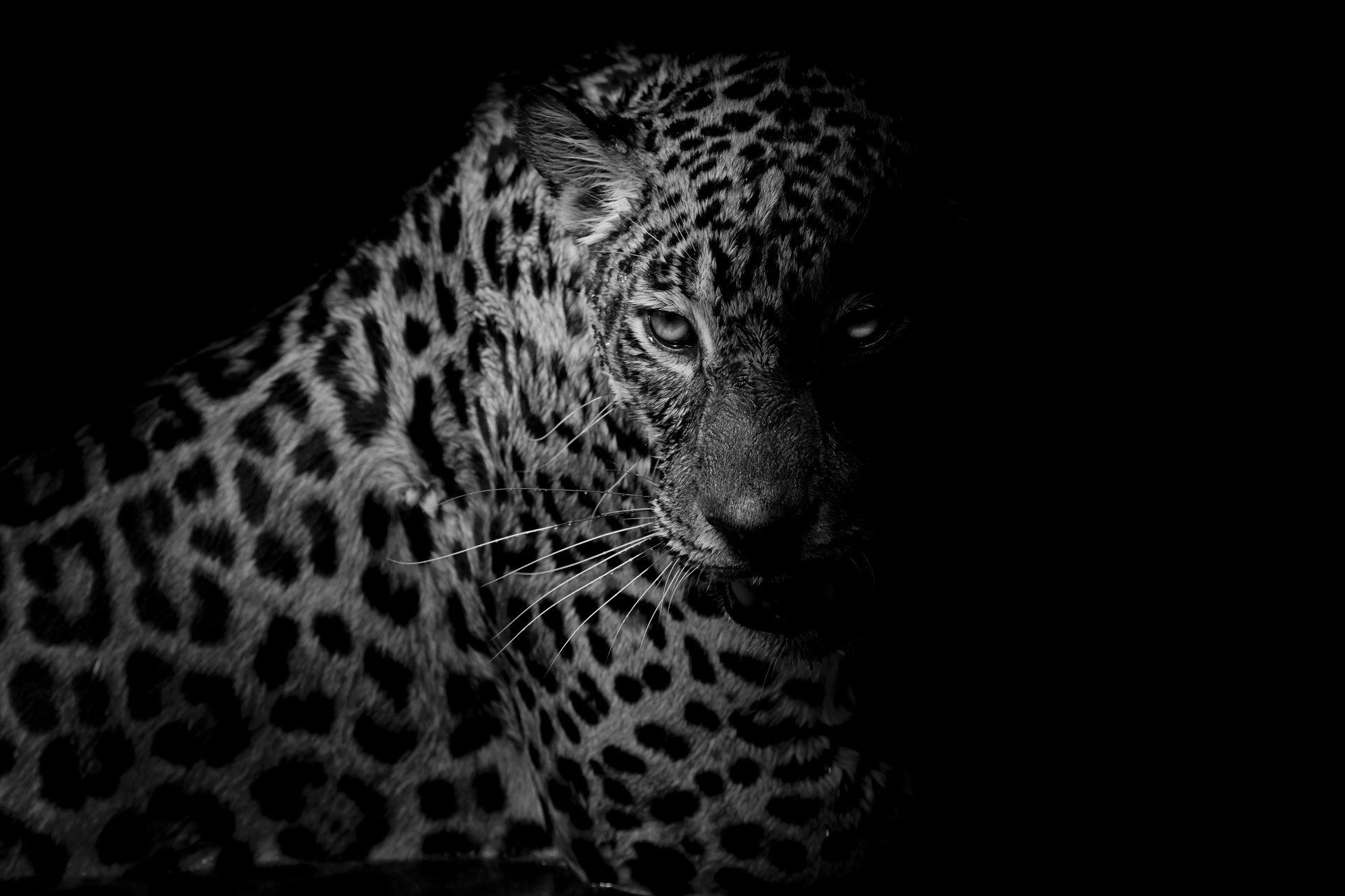 leopard full hd wallpaper and background image | 1920x1279 | id:672380