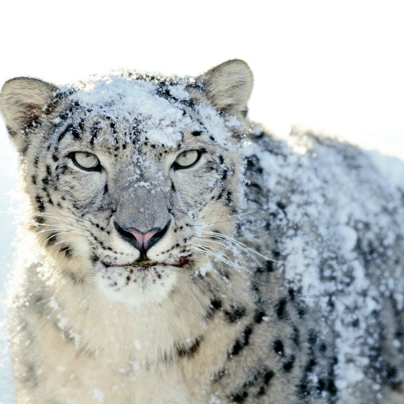10 Top Mac Snow Leopard Wallpapers FULL HD 1920×1080 For PC Desktop 2021 free download les wallpapers de mac os x snow leopard 1 800x800