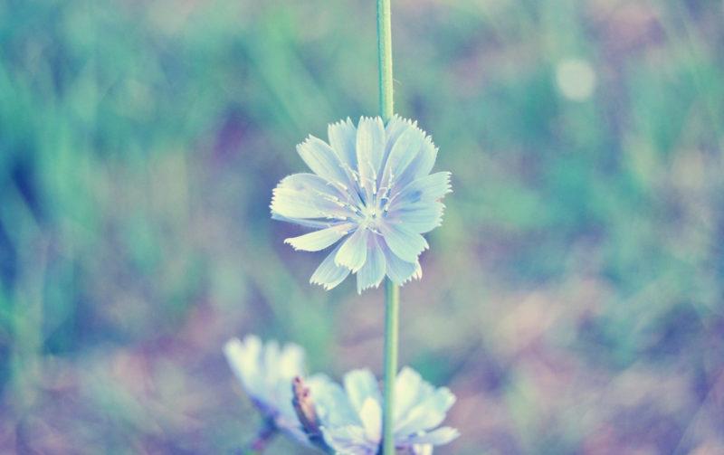 10 New Light Blue Flower Wallpaper FULL HD 1920×1080 For PC Desktop 2018 free download light blue flower wallpapers light blue flower stock photos 800x503