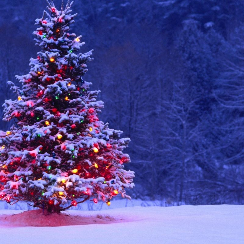 10 Most Popular Christmas Tree Snow Wallpaper Hd FULL HD 1080p For PC Desktop 2020 free download light covered snowy christmas tree hd wallpapers 800x800