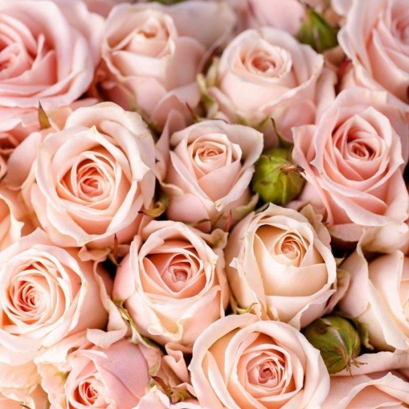 10 Best Pink Rose Background Wallpaper FULL HD 1920×1080 For PC Desktop 2018 free download light pink roses background wallpaper flowers pinterest pink 800x800