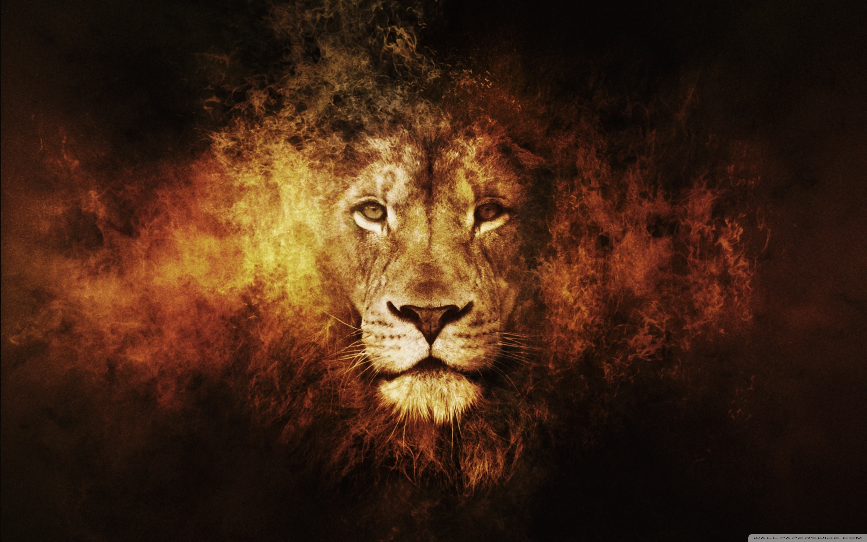 lion ❤ 4k hd desktop wallpaper for 4k ultra hd tv • tablet