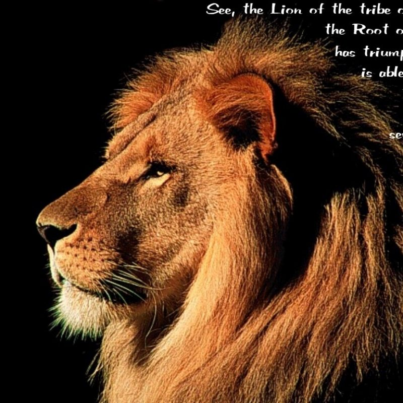 10 Most Popular Lion Of Judah Pics FULL HD 1920×1080 For PC Desktop 2021 free download lion of judah 800x800