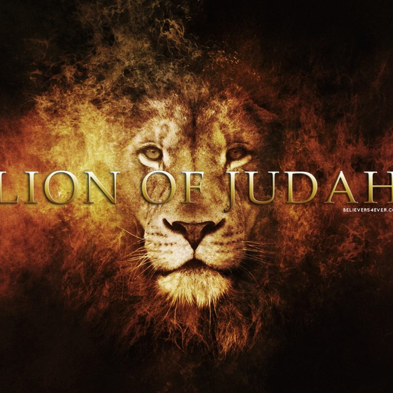 10 Most Popular Lion Of Judah Pics FULL HD 1920×1080 For PC Desktop 2020 free download lion of judah believers4ever 1 800x800