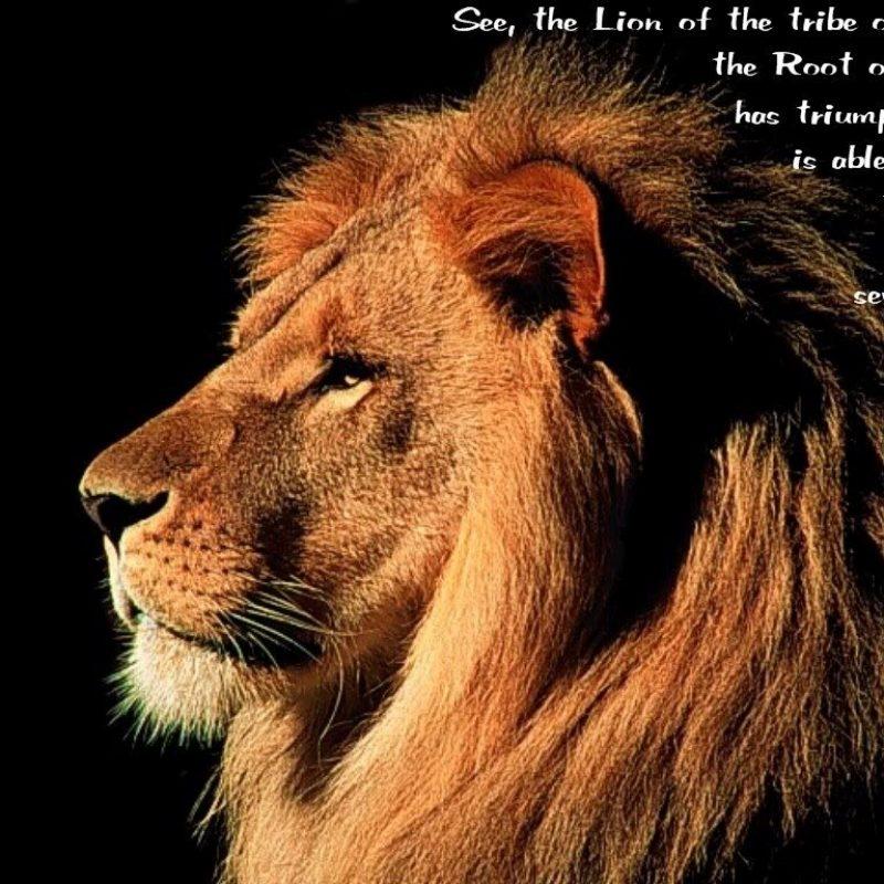 10 Best Lion Of Judah Image FULL HD 1920×1080 For PC Desktop 2020 free download lion of judah gospel 800x800