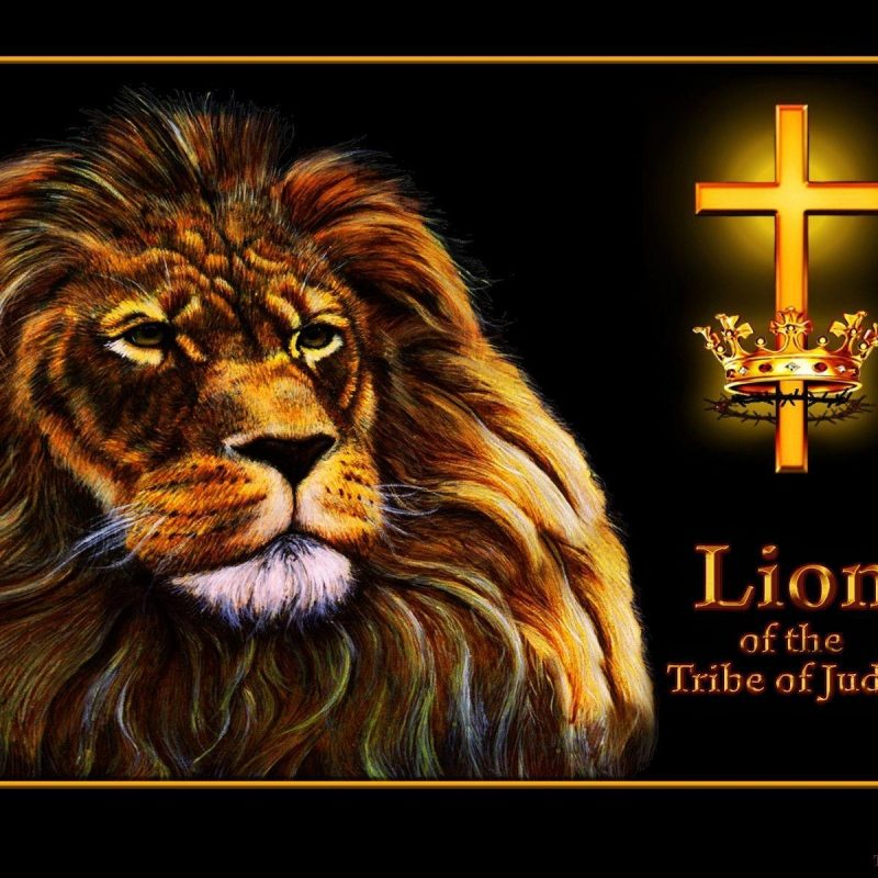 10 Most Popular Lion Of The Tribe Of Judah Pictures FULL HD 1920×1080 For PC Desktop 2021 free download lion of judah wallpapers wallpaper cave 1 800x800