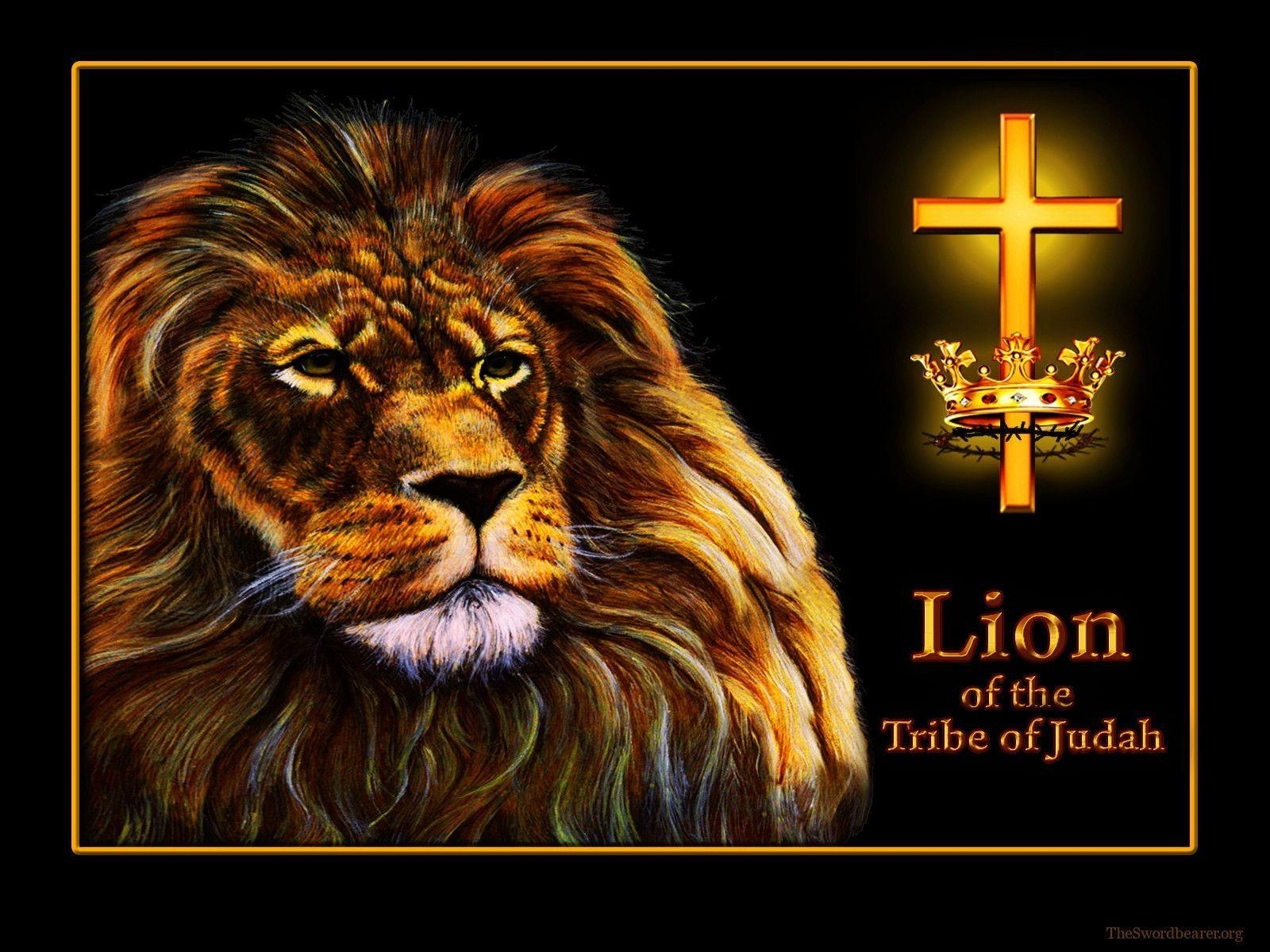 lion of judah wallpapers - wallpaper cave