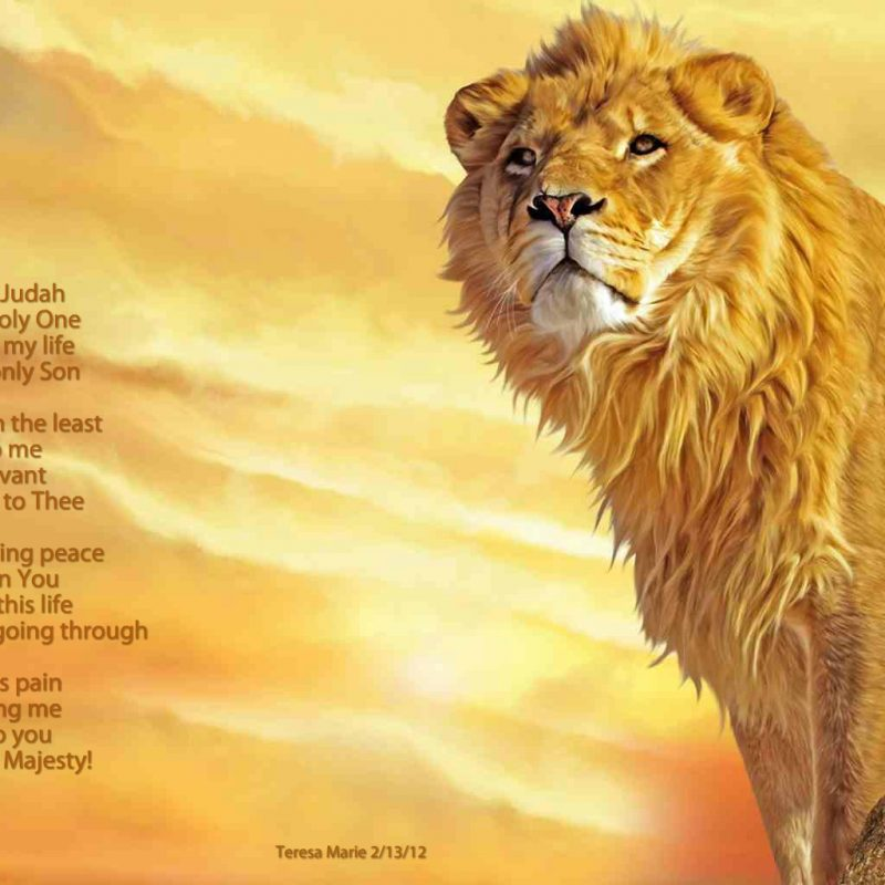10 Most Popular Lion Of Judah Pics FULL HD 1920×1080 For PC Desktop 2020 free download lion of judah what about god 800x800