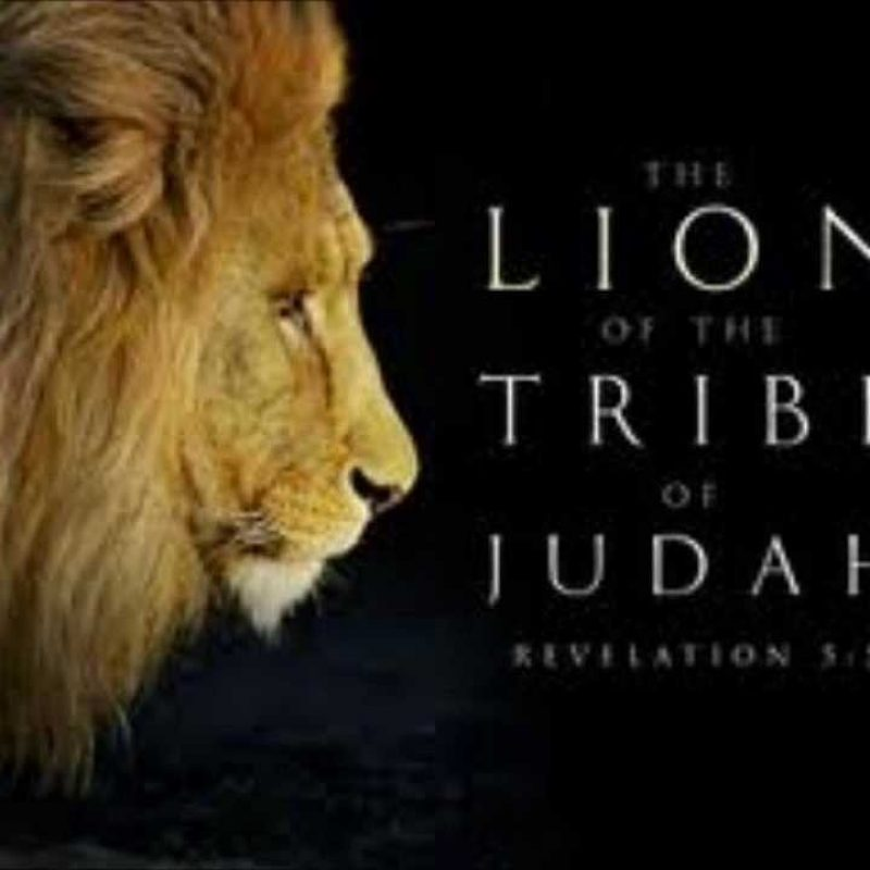 10 Most Popular Lion Of The Tribe Of Judah Pictures FULL HD 1920×1080 For PC Desktop 2020 free download lion of the tribe of judah rev angela williams youtube 800x800