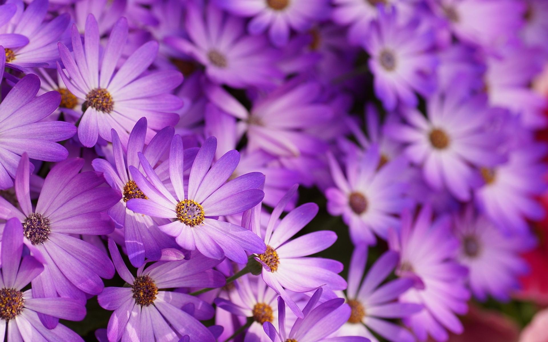 little purple flowers hd | hd desktop background