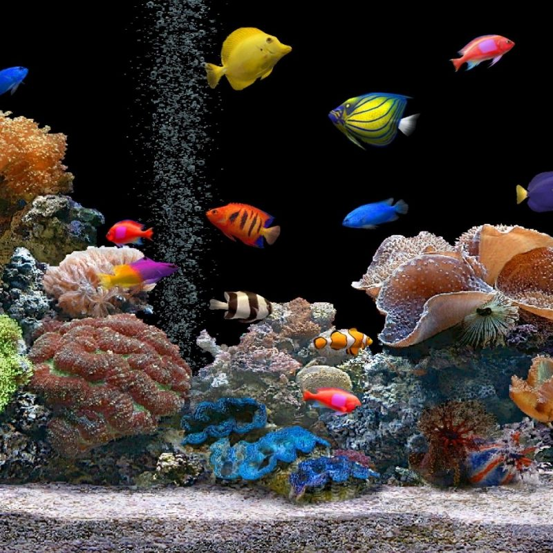 10 Latest Fish Tank Background Wallpaper FULL HD 1920×1080 For PC Background 2020 free download live fish tank desktop background wallpaper 800x800