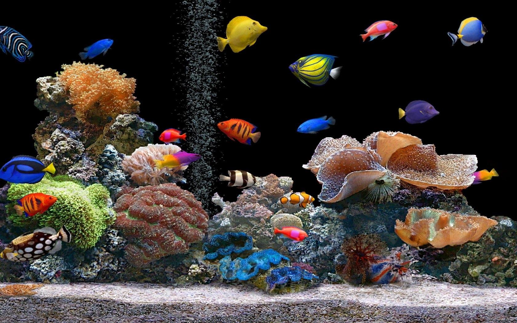 live fish tank desktop background wallpaper