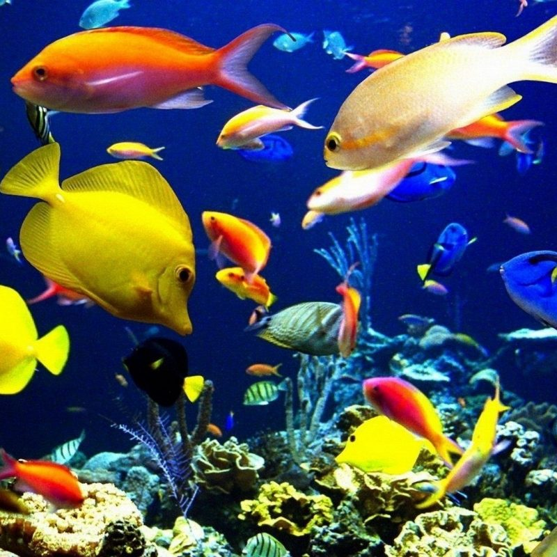 10 Latest Tropical Fishes Wallpapers Hd FULL HD 1080p For PC Desktop 2018 free download lord ganesha wallpapers wallpapers for desktop pinterest fish 800x800