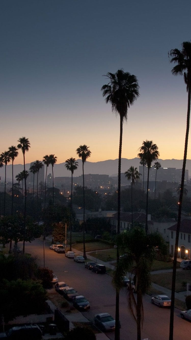 los angeles palm trees iphone | wallpaper | pinterest | palm, los