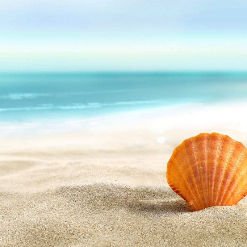 10 New Sea Shell Wall Paper FULL HD 1080p For PC Background 2021 free download lost seashell 4k wallpaper free 4k wallpaper 800x800