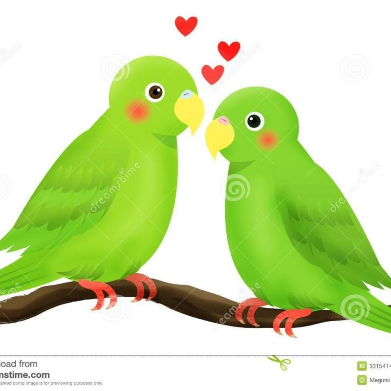 10 Top Images Of Love Bird FULL HD 1920×1080 For PC Background 2020 free download love bird stock vector illustration of heart branch 3315414 800x800