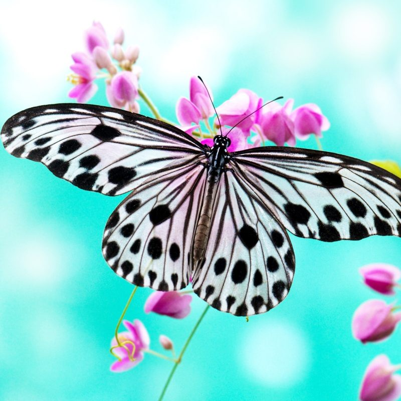 10 Most Popular Beautiful Wallpapers Of Butterflies FULL HD 1920×1080 For PC Desktop 2018 free download lovely beautiful birds butterfly hd wallpapers photos and images 800x800
