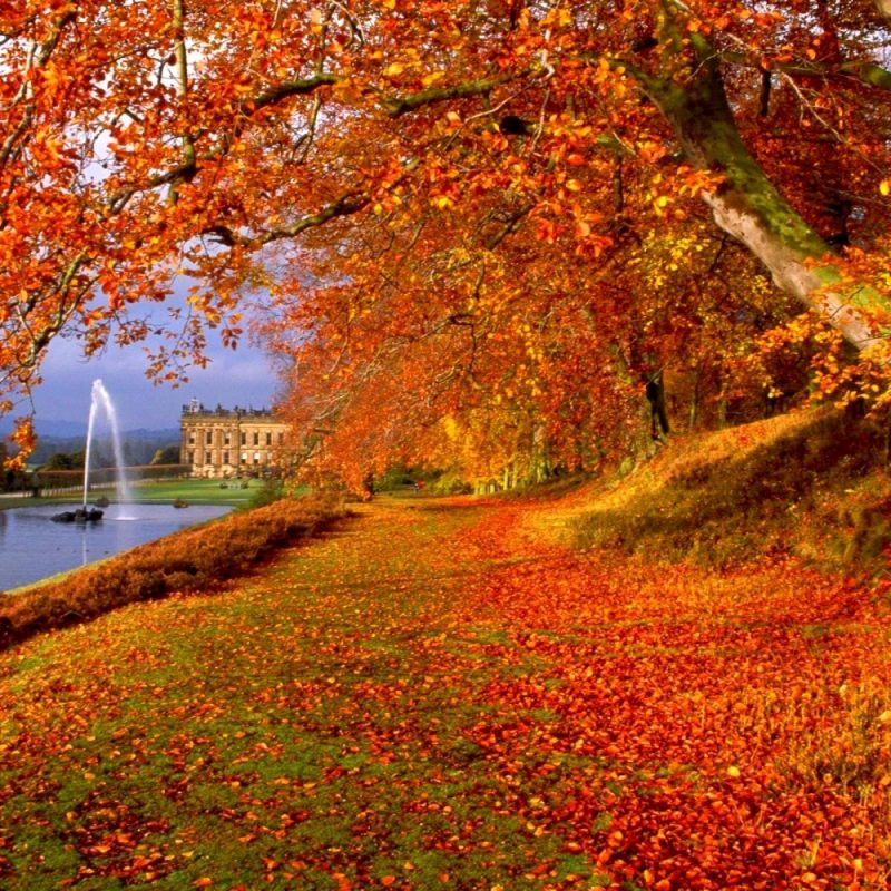 10 New Fall Desktop Wallpapers Free FULL HD 1080p For PC Desktop 2021 free download lovely free desktop wallpaper and background celebswallpaper 800x800