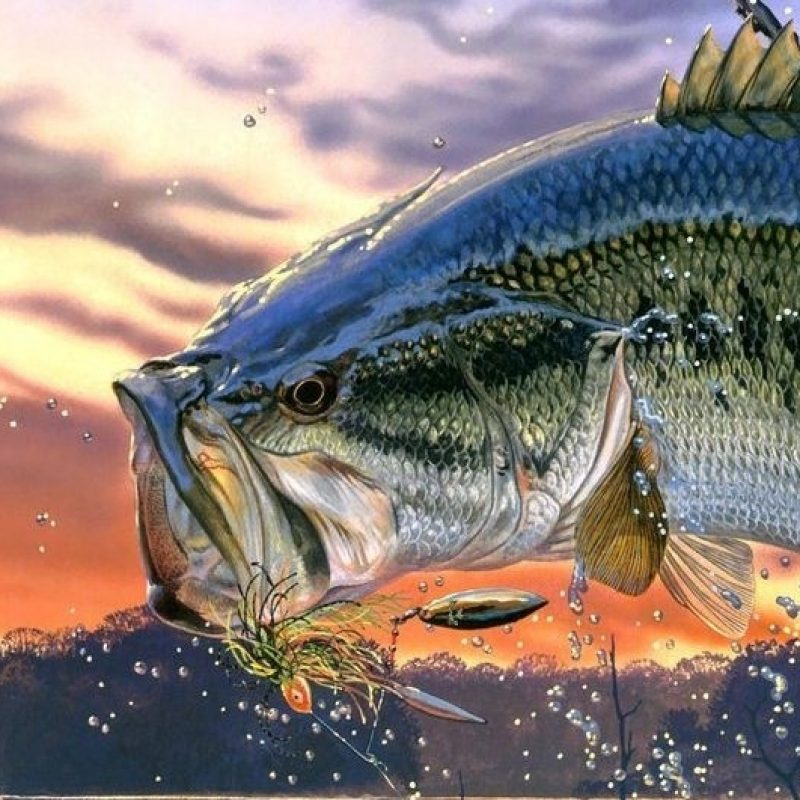 10 Most Popular Bass Fishing Screen Savers FULL HD 1080p For PC Background 2021 free download lures 800x800