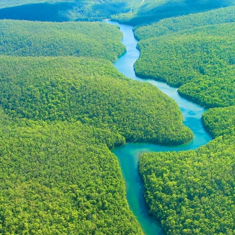 10 Latest Pictures Of Amazon Rainforest FULL HD 1080p For PC Background 2021 free download %name