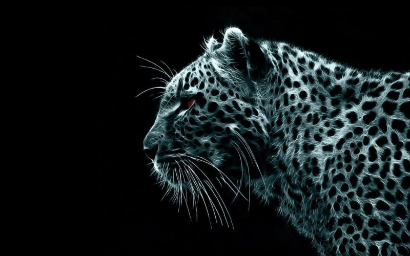 10 Latest Snow Leopard Wallpaper Mac FULL HD 1920×1080 For PC Desktop 2021 free download mac leopard wallpapers wallpaper cave 800x500