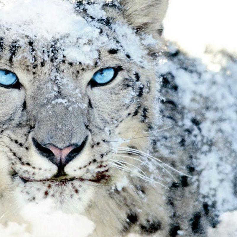 10 Top Mac Snow Leopard Wallpapers FULL HD 1920×1080 For PC Desktop 2021 free download mac os x leopard wallpaper 66 xshyfc 800x800