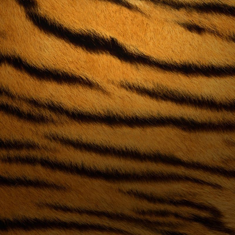 10 Latest Os X Tiger Wallpaper FULL HD 1920×1080 For PC Desktop 2018 free download mac os x tiger wallpapers wallpaper cave 3 800x800