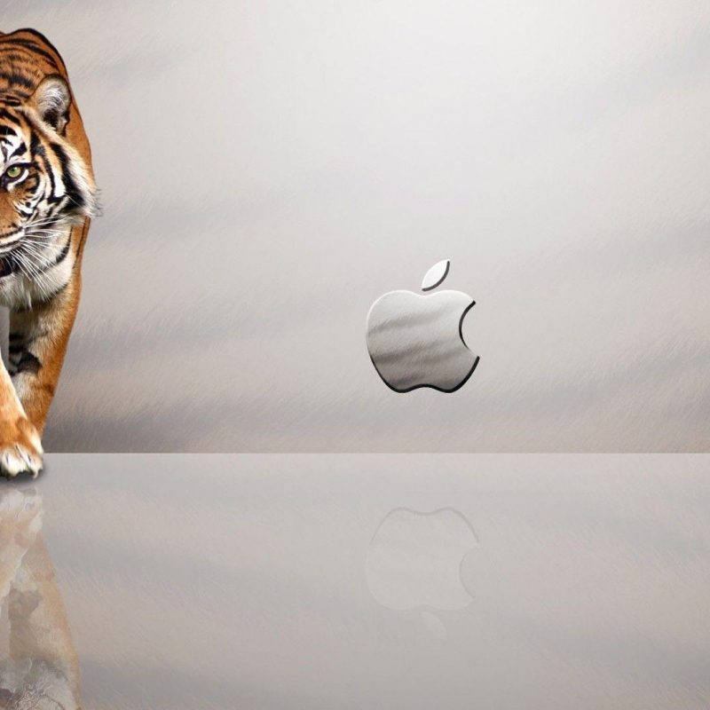 10 Latest Os X Tiger Wallpaper FULL HD 1920×1080 For PC Desktop 2018 free download mac os x tiger wallpapers wallpaper cave 4 800x800