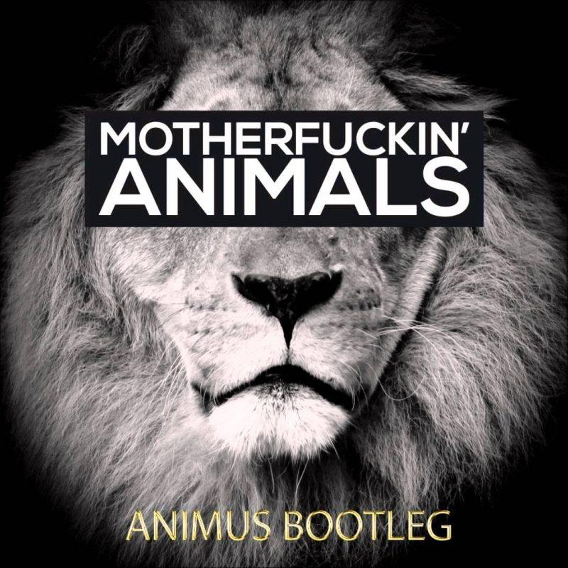 10 Best Martin Garrix Animals Logo FULL HD 1920×1080 For PC Background 2018 free download martin garrix animals animus bootleg youtube 800x800