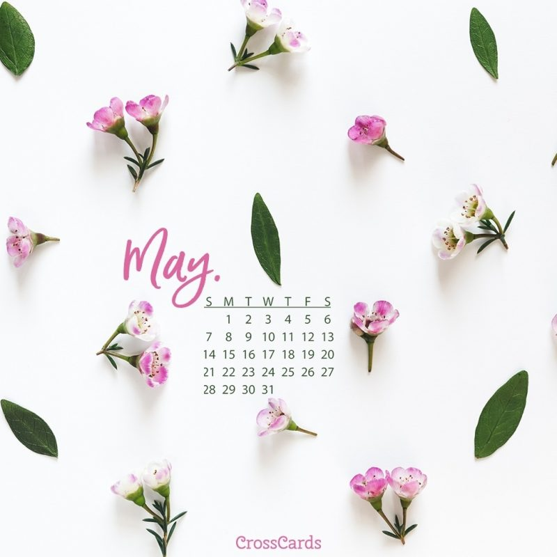 10 New May 2017 Calendar Wallpaper FULL HD 1080p For PC Background 2021 free download may 2017 pink flowers desktop calendar free may wallpaper 800x800