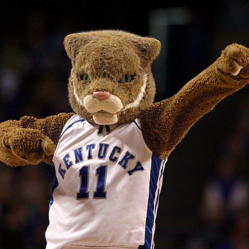 10 New Kentucky Wildcats Mascot Pictures FULL HD 1920×1080 For PC Desktop 2018 free download meet the pga tour caddie who was once the university of kentuckys 800x800