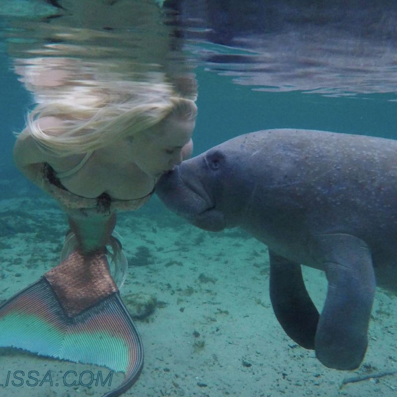 10 Best A Picture Of A Real Mermaid FULL HD 1080p For PC Background 2018 free download mermaid melissa the loving manatees video mermaid melissa rea 800x800