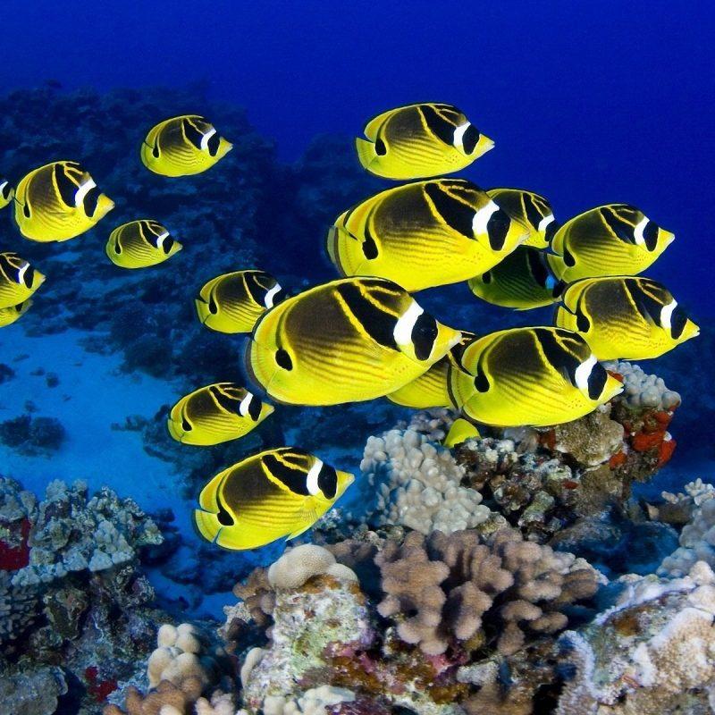 10 Top Tropical Fish Desktop Wallpaper FULL HD 1080p For PC Background 2020 free download meu fish wallpapers 43 beautiful fish wallpapers 1 800x800