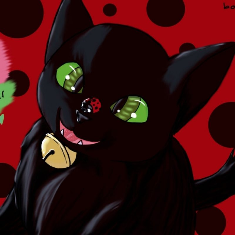 10 Top Ladybug And Cat Noir Wallpaper FULL HD 1080p For PC Desktop 2021 free download miraculous ladybug and chat noirthebookwormmaddy on deviantart 800x800