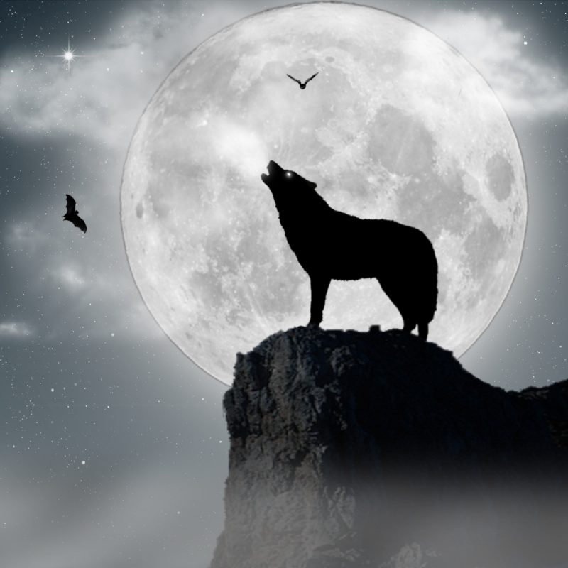 10 Best Wolf Howling At The Moon Wallpaper FULL HD 1080p For PC Background 2020 free download moon wolf wallpaper http www 0wallpapers 1772 moon wolf 800x800