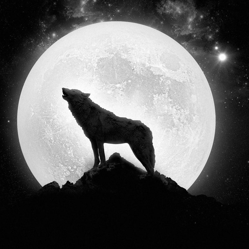 10 Top Moon And Wolf Wallpaper FULL HD 1920×1080 For PC Background 2020 free download moon wolves wallpaper 81861 800x800