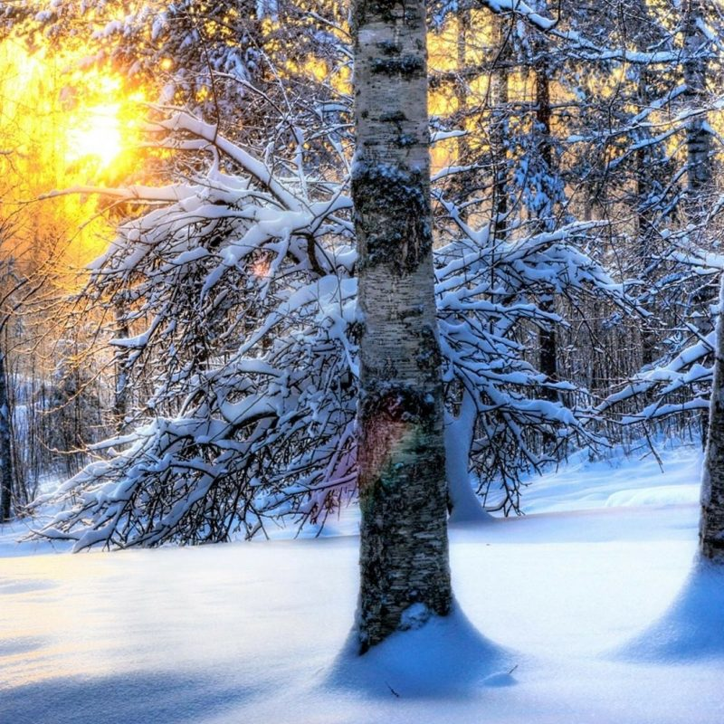 10 Latest Winter Forest Hd Wallpaper FULL HD 1920×1080 For PC Background 2020 free download morning in the winter forest wallpaper wallpaper studio 10 tens 800x800